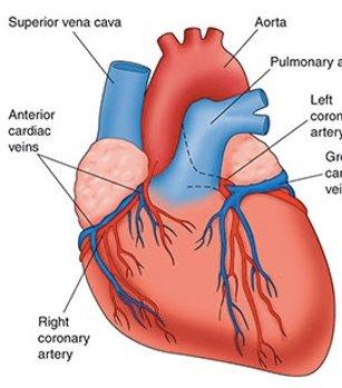 best-heart-transplant-surgery-india